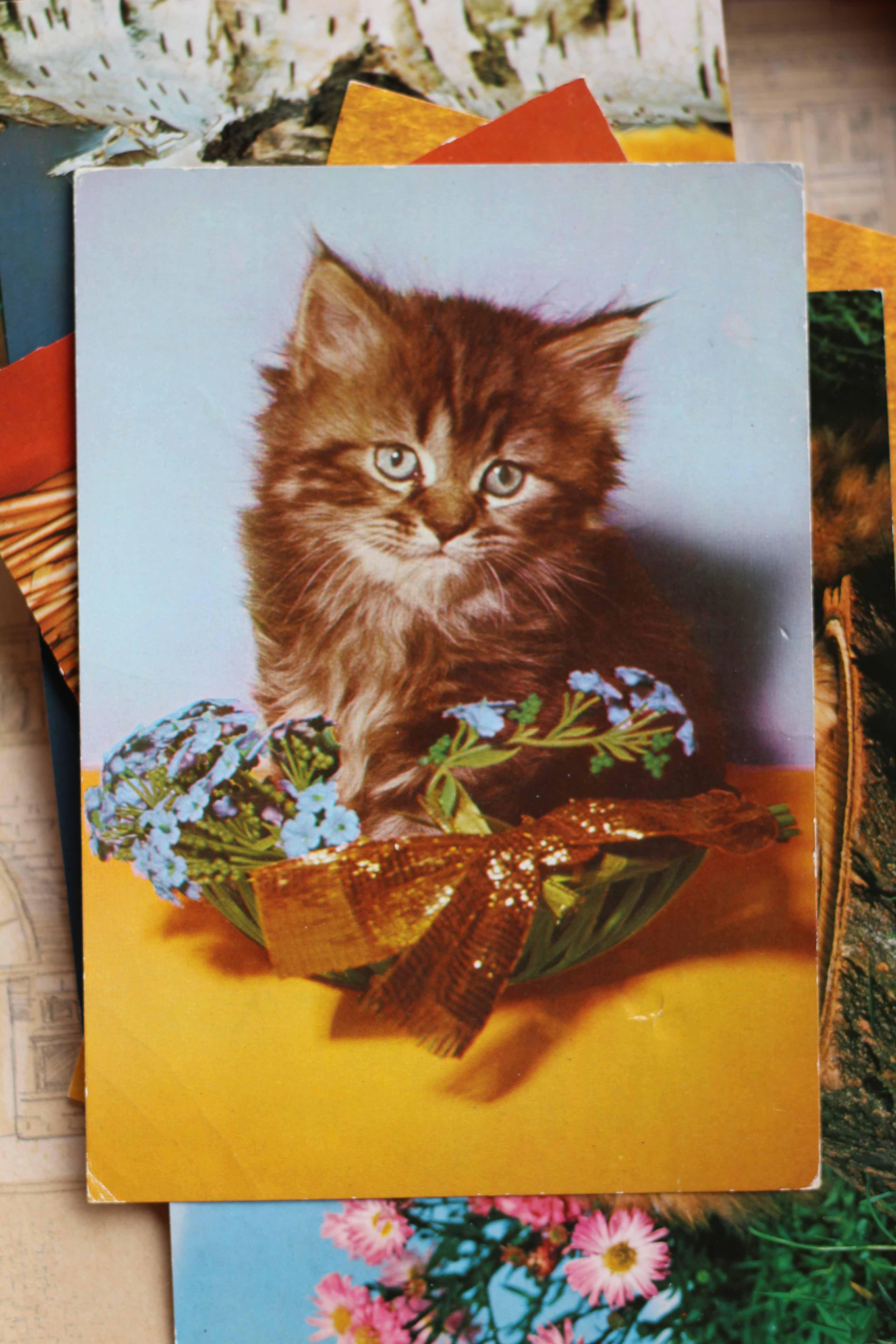 Kein Online-Angebot ohne Cat Content!